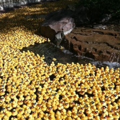 Duck fest pond