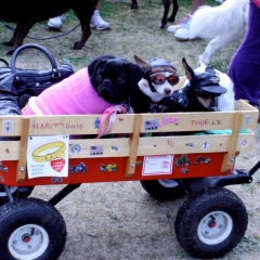 dogs in wagon